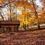 Stavba drevenej chatky? 10 inšpirácii na drevené chaty
